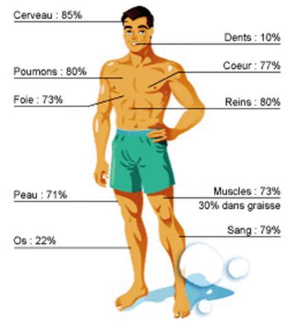 hydratation corps humain
